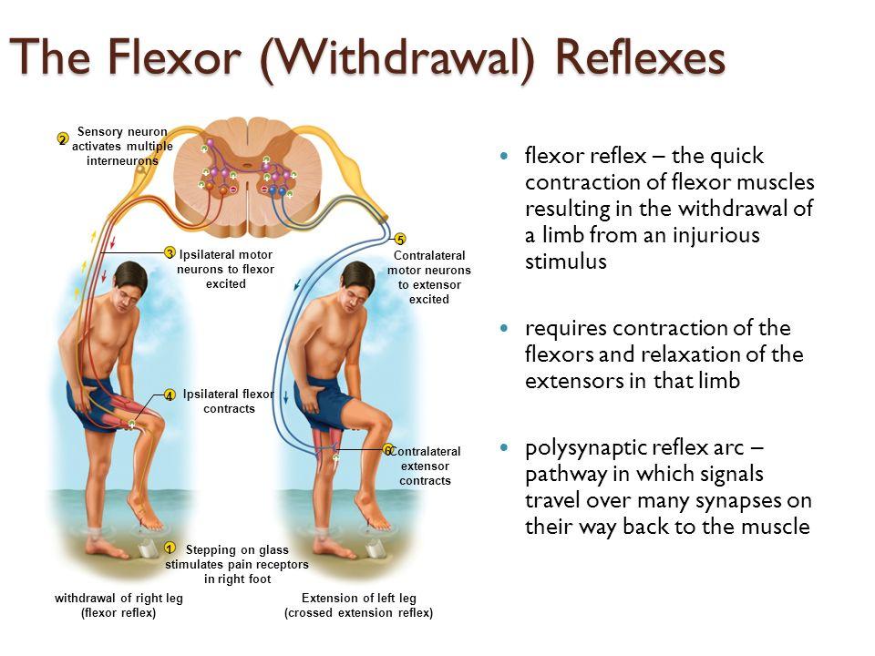 reflekser i kroppen